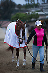 DEL MAR,CA-AUGUST 19: California Chrome is walking around the barn at Del Mar Race Track on August 17,2016 in Del Mar,California (Photo by Kaz Ishida/Eclipse Sportswire/Getty Images)