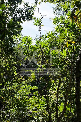Brazil. Transition forest.