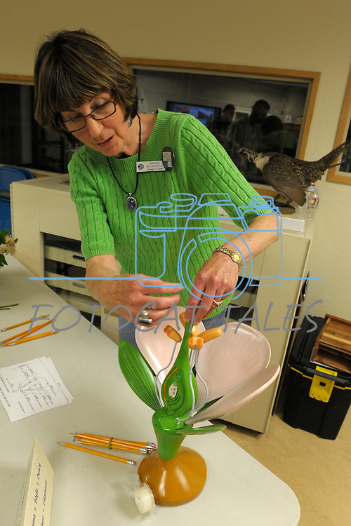 Volunteer Margee McCafferty uses a model to show the parts of a flower during Nevada Wildflower Family Fun Day at the Nevada State Museum in Carson City Saturday April 11, 2015. Visitors to the museum were treated to loads of information, hands-on experiences and crafts.<br /> Photo by Lisa J. Tolda