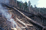 Slash and Burn Agriculture (Tavy) and the planting of hill rice. Forest destruction on the edge of Mantadia NP. East Madagascar.