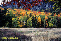 KN07-023d  Forest - autumn, Mt. Kineo, Maine