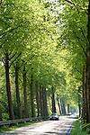 Europa, DEU, Deutschland, Nordrhein Westfalen, NRW, Westfalen, Hagen, Strasse, Allee, Baumallee, Strassenverkehr, Auto, KFZ, Kategorien und Themen, Natur, Umwelt, Pflanzen, Pflanzenkunde, Botanik, Biologie, Verkehr, Strassenverkehr, Auto, Automobile, Mobil, Kraftfahrzeug, KFZ, Strasse, Verkehrsmittel, Mobilitaet, Unterwegs....[Fuer die Nutzung gelten die jeweils gueltigen Allgemeinen Liefer-und Geschaeftsbedingungen. Nutzung nur gegen Verwendungsmeldung und Nachweis. Download der AGB unter http://www.image-box.com oder werden auf Anfrage zugesendet. Freigabe ist vorher erforderlich. Jede Nutzung des Fotos ist honorarpflichtig gemaess derzeit gueltiger MFM Liste - Kontakt, Uwe Schmid-Fotografie, Duisburg, Tel. (+49).2065.677997, ..archiv@image-box.com, www.image-box.com]