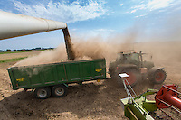 Claas Lexion 480 loading trailer with combinable peas - August, Lincolnshire