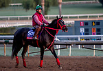 October 30, 2019: Breeders' Cup Sprint entrant Shancelot, trained by Jorge Navarro, exercises in preparation for the Breeders' Cup World Championships at Santa Anita Park in Arcadia, California on October 30, 2019. Carolyn Simancik/Eclipse Sportswire/Breeders' Cup/CSM