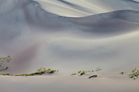 Great Sand Dunes National Park, Colorado.  Before sunrise, the only real color in this image is that of the grasses growing.<br /> <br /> Canon EOS 5D Mk II, 70-200 f/2.8L lens