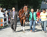 8.8.11 Majesticperfection is led into the paddock for the Vanderbuilt Handicap.