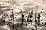 Brazoria County, Damon, Texas; sunset cloud formations, sun rays and reeds reflecting in the surface of the slough