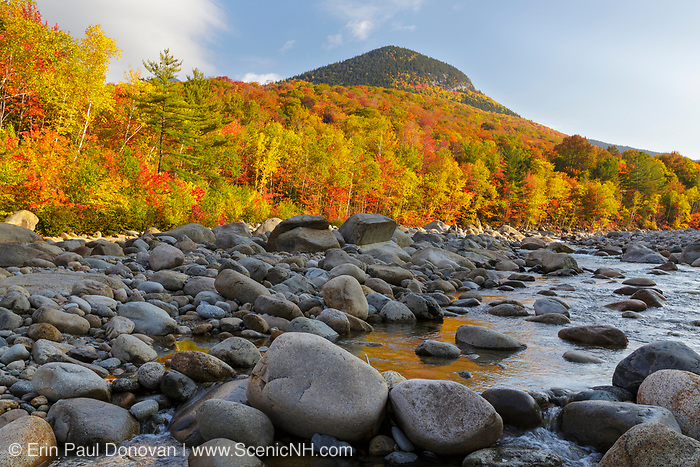 Autumn foliage along the East Branch of the Pemigewasset River in Lincoln, New Hampshire on a cloudy autumn morning during a time when the river was very low. This location is just above where Clear Brook drains into the East Branch of the Pemigewasset River. Potash Knob is in the background.