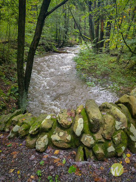 Lycoming County, PA stream. Tiadaghton State Forest