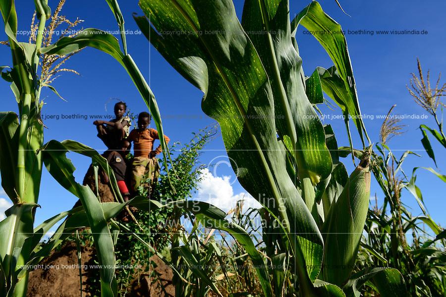 Zambia Chiawa, children in maize field which are attacked often by wild animals from the Lower Zambezi National Park / SAMBIA Chiawa, Doerfer im Game Reserve Area des Lower Zambezi Nationalpark, die Dorfbewohner und ihre Felder werden staendig von Wildtieren wie Elefanten, Nilpferden etc attackiert, Kinder im Maisfeld