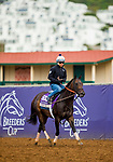 DEL MAR, CA - NOVEMBER 01:   Carina Mia, owned by Three Chimneys Farm LLC and trained by Chad C. Brown, exercises in preparation for Breeders' Cup Filly & Mare Sprint at Del Mar Thoroughbred Club on November 01, 2017 in Del Mar, California. (Photo by Alex Evers/Eclipse Sportswire/Breeders Cup)