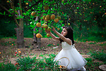 A pretty girl collects oranges at a field. Photo by Mahmoud Khattab