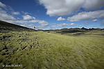 Mousses vert bronze de l Eldhraun.Les laves se couvrent d un epais tapis de mousses (Rhacomitrium) vert bronze. Au fil du temps, le feu petrifie de la lave s est transforme grace au vent deposant des particules minerales en une couche vegettale ondoyante sous le soleil. ..A Moss Carpet on the Eldhraun Lava Field. Iceland..