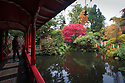 30/10/16<br /> <br /> A woman admires the view from the pagoda.<br /> <br /> Many stunning trees are putting on a spectacular autumn display in the Chinese Garden at Biddulph Grange near Stoke on Trent, Staffordshire. Gardeners at the National Trust property are saying the frost-free autumn may have helped to make this one of the most colourful seasons in many years.<br /> <br /> <br /> All Rights Reserved F Stop Press Ltd. +44 (0)1773 550665