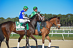 OLDSMAR, FLORIDA - FEBRUARY 13: Tepin #5 ridden by jockey Julien Leparoux, on parade to post, prior to the Lambholm South Endeavour Stakes at Tampa Bay Downs on February 13, 2016 in Oldsmar, Florida (photo by Doug DeFelice/Eclipse Sportswire/Getty Images)