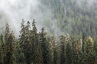 Mist shrouded forest, Tongass National Forest, Southeast, Alaska