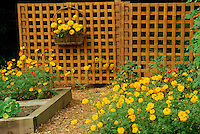 Working garden -- trellis hides garden tools and shed and is covered with orange and yellow flowers and nursery beds