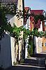 Blick in die Hubergasse mit Weinreben über der Straße