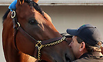 May 03, 2015 American Pharoah greeted fans and media the day after winning the 141st Kentucky Derby at Churchill Downs in Louisville, Kentucky.  He is pictured here with assistant trainer Jimmy Barnes. ©Mary M. Meek/ESW/CSM