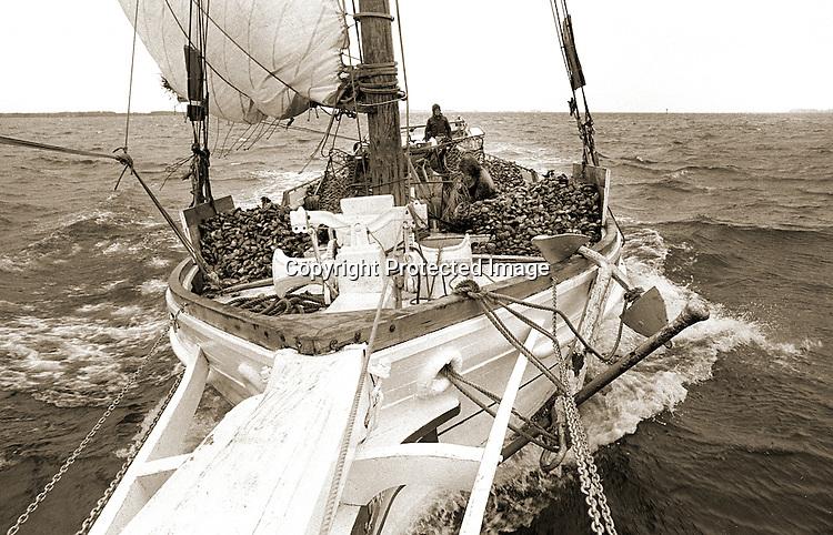 Watermen dredge oysters under sail on the skipjack Rebecca T. Ruark in 1976.