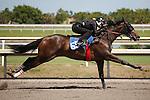 #65 fastest work 10:0Fasig-Tipton Florida Sale,Under Tack Show. Palm Meadows Florida 03-23-2012