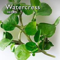 Watercress Pictures | Watercress Food Photos Images & Fotos