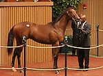 Hip #256 Hard Spun - Ruby's Realm colt at the Keeneland September Yearling Sale.  September 11, 2012.