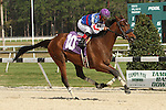 January 31, 2015: Hold the Presses  wins the 4th Race scene at Tampa Bay Downs. Sue Kawczynski/ESW/CSM