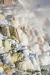 Travetine terraces. Mammoth hot springs, Yellowstone National Park, Wyoming, USA.