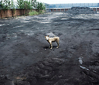 A dog stands at a coal industrial site, with coal piled up in the corner.