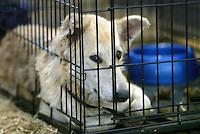 Pasados Safe Haven volunteers rescue animals after Hurricane Katrina struck New Orleans on September 15, 2995. © Karen Ducey