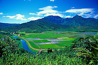 Hanalei Valley taro fields and Hanalei River from overlook, Hanalei National Wildlife Refuge, north shore, Kauai. Habitat for endangered waterbirds.