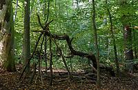 GERMANY, Hamburg, forest / Deutschland, Hamburg, Wald im Jenisch Park, Baumhöhle