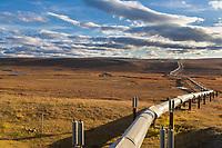 Trans Alaska Oil Pipeline traverses the arctic tundra, Alaska.