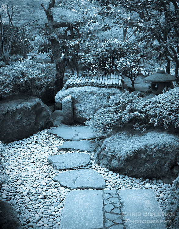 Cyanotype effect on stone walkway  with river stones leads to well in Portland Japanese Garden strolling garden.  Lantern seen in background amoung trees and rhododendrons and azaleas.