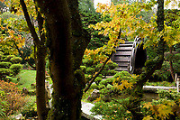 Japanese Tea Garden in Golden Gate Park, San Francisco, California. Drum Bridge.