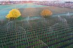 Foto: VidiPhoto<br /> <br /> VALBURG – De meeste fruittelers houden hun kruit droog voor de nacht van dinsdag op woensdag als er matige vorst wordt verwacht. De drie broers van fruitbedrijf T. A. van Blijderveen en Zn. in Valburg in de Betuwe namen geen risico en zetten dinsdagmorgen de beregeningsinstallatie al aan het werk om het fruit te beschermen. Het bedrijf bezit 30 ha. appels en peren. Nachtvorst zorgt zonder beregening (ijs zorgt voor een beschermlaag rond de knop) voor beschadiging van de schil, zelfs als er alleen nog maar uitgelopen knoppen aan de bomen zitten, zodat appels en peren niet meer als klasse 1 verkocht kunnen worden.