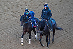 November 3, 2020: Echo Town, trained by trainer Steven M. Asmussen, exercises in preparation for the Breeders' Cup Sprint at Keeneland Racetrack in Lexington, Kentucky on November 3, 2020. John Voorhees/Eclipse Sportswire/Breeders Cup/CSM