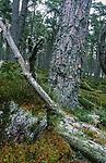 Forest -  Scotland