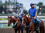 Gun Runner, owned by Winchell Thoroughbreds LLC & Three Chimneys Farm LLC and trained by Steven M. Asmussen, exercises in preparation for the Breeders' Cup Classic **ENTERED IN MULTIPLE RACES**