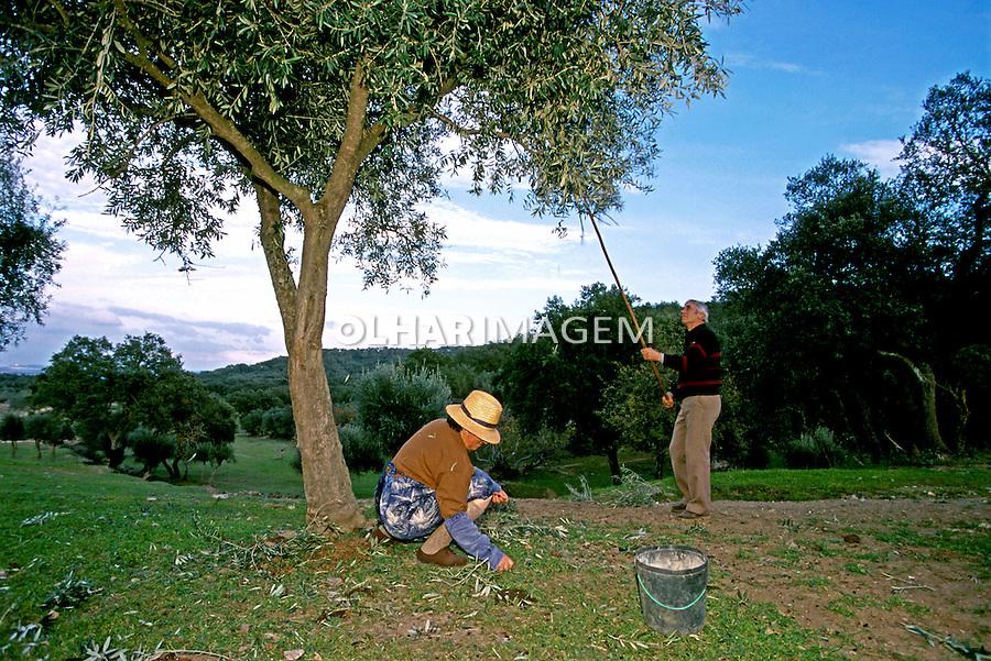 Colheita de azeitonas em Alentejo. Portugal. 1999. Foto de Juca Martins.