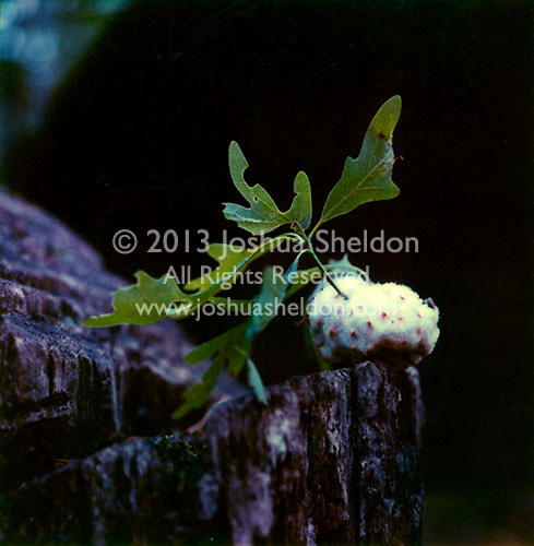 Oak tree sprouting<br />