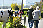The front group of favourites with Italian Champion Elisa Longo Borghini (ITA) Trek-Segafredo, World Champion Anna Van Der Breggen (NED) Team SD Worx, European Champion Annemiek Van Vleuten (NED) Movistar Team Women, Katarzyna Niewiadoma (POL) Canyon//SRAM Racing and Demi Vollering (NED) Team SD Worx near the end of Liege-Bastogne-Liege Femmes 2021, running 141km from Bastogne to Liege, Belgium. 25th April 2021.  <br /> Picture: A.S.O./Gautier Demouveaux | Cyclefile<br /> <br /> All photos usage must carry mandatory copyright credit (© Cyclefile | A.S.O./Gautier Demouveaux)