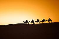 Camel Carivan, Morocco<br />