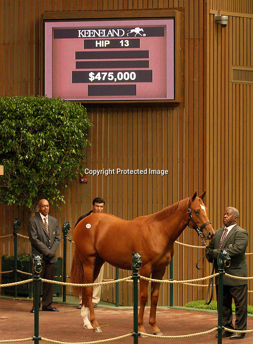 12 September 2010.  Hip #13 Ghostzapper - Azeri filly sold for $475,000 at the Keeneland September Yearling sale.  Consigned by Hill n'Dale.