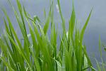 Europa, DEU, Deutschland, Nordrhein-Westfalen, Niederrhein, Wachtendonk, Fluss Niers, Aue, Auenlandschaft, Ufer, Schild, Regentropfen, Natur, Umwelt, Landschaft, Jahreszeiten, Stimmungen, Landschaftsfotografie, Landschaften, Landschaftsphoto, Landschaftsphotographie, <br /> <br /> [Fuer die Nutzung gelten die jeweils gueltigen Allgemeinen Liefer-und Geschaeftsbedingungen. Nutzung nur gegen Verwendungsmeldung und Nachweis. Download der AGB unter http://www.image-box.com oder werden auf Anfrage zugesendet. Freigabe ist vorher erforderlich. Jede Nutzung des Fotos ist honorarpflichtig gemaess derzeit gueltiger MFM Liste - Kontakt, Uwe Schmid-Fotografie, Duisburg, Tel. (+49).2065.677997, ..archiv@image-box.com, www.image-box.com]