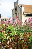 Succulents in Gardens of Alcatraz with historic buildings