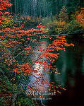 Dogwood, Rogue River National Wild and Scenic River, Rogue River National Forest, Oregon