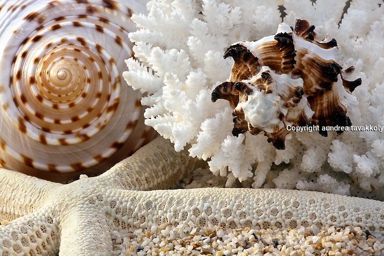 Shells and coral with sand