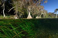 Wacissa river, Florida